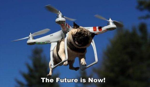 future dog meme