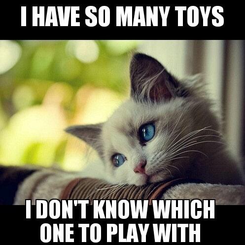 cat meme funny